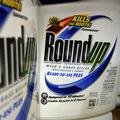 Porota v USA prikázala firme Monsanto zaplatiť odškodné 2 mld. USD dvojici s rakovinovým ochorením