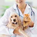 Zdravotné ajúrazové: Na Slovensko prichádza poistenie pre psov amačky