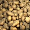 Ceny zemiakov na Slovensku lámu rekordné hodnoty