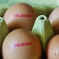 Vtáčia chrípka vyvíja tlak na ceny vajec v Európe