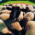 Nebuďte ovce: 5 najhorších odporúčaní pre vaše peniaze